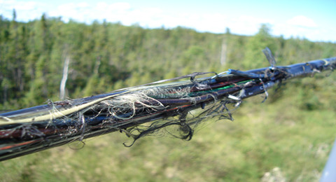 environmental factor: lightning causes cable damage